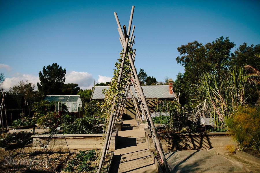 Image Ref: M265<br /> Location: Royal Botanical Gardens, Melbourne<br /> Date: 03.06.17