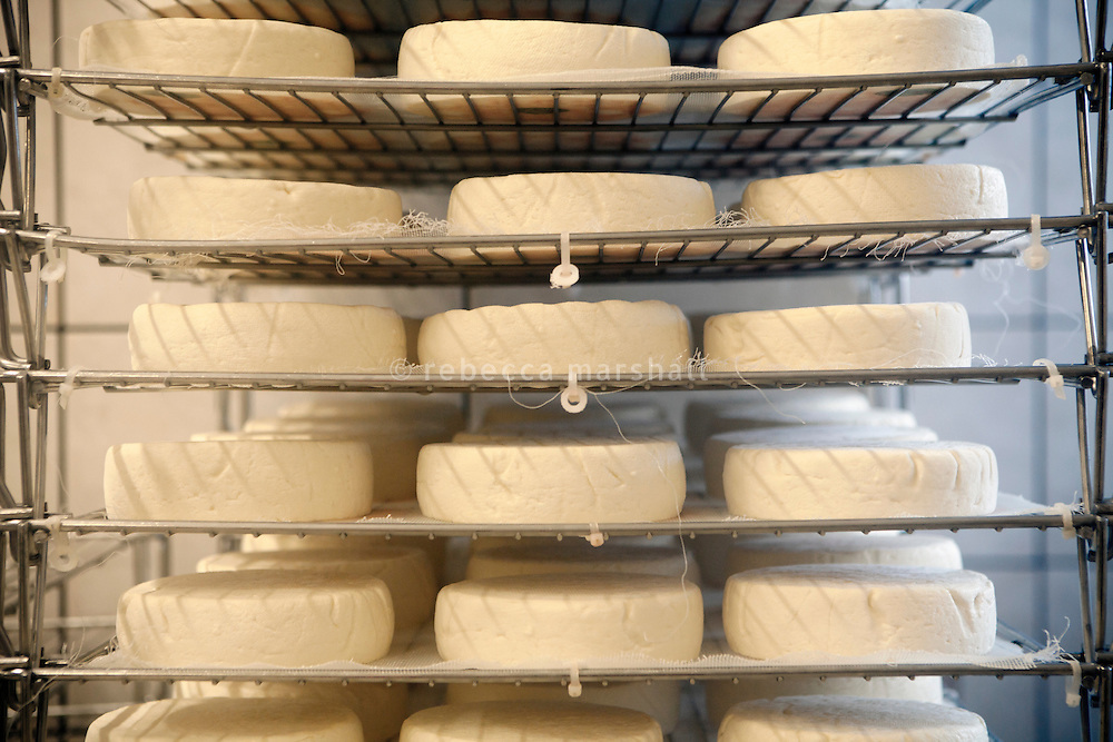Reblochon cheeses on airing racks in the dairy at the Ferme le Tavaillon, Le Grand Bornand, France, 16 February 2012.