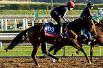 ARCADIA, CA  OCTOBER 31. Breeders' Cup Filly & Mare Turf entrant Fleeting, trained by Aidan P. O'Brien,   exercises in preparation for the Breeders' Cup World Championships at Santa Anita Park in Arcadia, California on October 31, 2019.  (Photo by Casey Phillips/Eclipse Sportswire/CSM)
