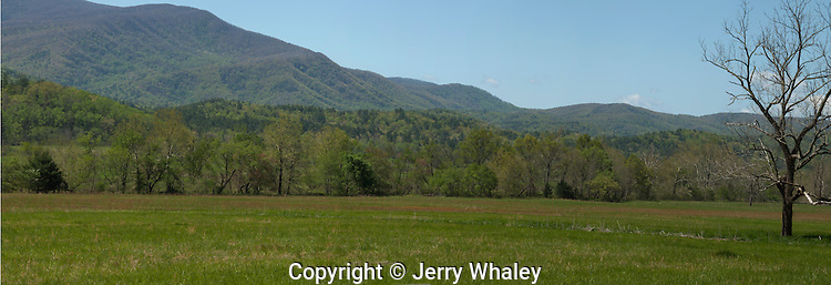 Cades Cove, Early Spring, Great Smoky Mountains NP, TN