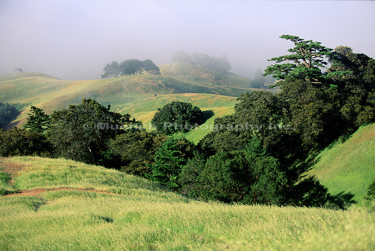 Mt. Tamalpais SP  CALIFORNIA