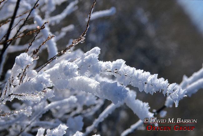 Snow On Grasses
