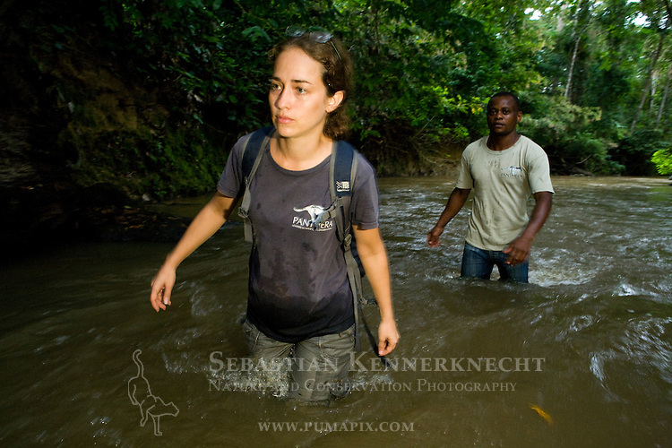 African Golden Cat (Caracal aurata aurata) biologist Laila Bahaa-el-din and Arthur Dibambo wading through river, Lope National Park, Gabon