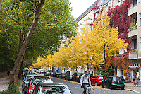 Berlino, quartiere Kreuzberg, Bergmannstraße. Colori delle piante a inizio autunno --- Berlin, Kreuzberg district, Bergmannstrasse. Autumn colors