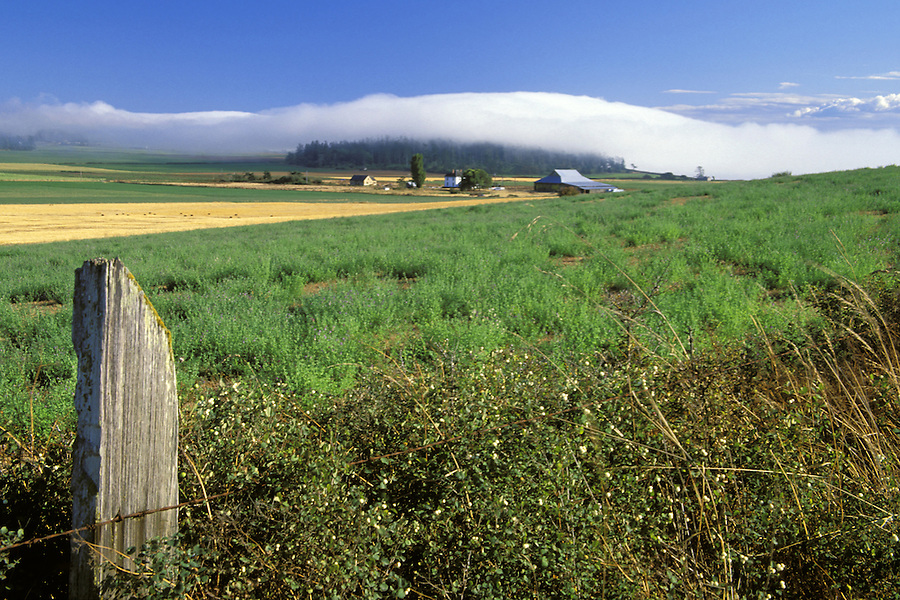 Ebey's Prairie and fence post, Ebey's Landing National Historic Reserve, Coupeville, Whidbey Island, Washington