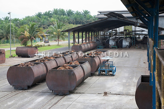 Huge metal containers full of oil palm fresh fruit bunches (FFBs) are lined up to enter the mill. The Sindora Palm Oil Mill, owned by Kulim, is green certified by the Roundtable on Sustainable Palm Oil (RSPO) for its environmental, economic, and socially sustainable practices. Johor Bahru, Malaysia