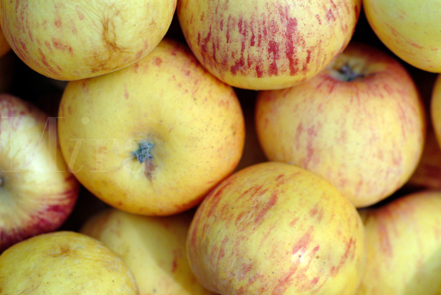 Closeup of a box of Fuji apples in Sonoma County California