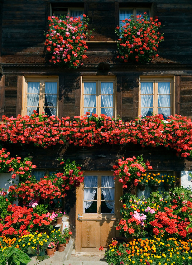 CHE, SCHWEIZ, Kanton Bern, Berner Oberland, Ringoldingen im Simmental: blumengeschmuecktes Wohnnhaus | CHE, Switzerland, Bern Canton, Bernese Oberland, Ringoldingen at Simmen Valley: flower decorated residential building