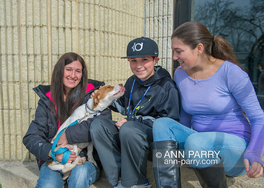 Wantagh, New York, USA. February 7, 2016. Mom SARI, son ANDREW, and daughter EMILY, volunteers from Merrick, pet Halley the white and orange beagle, who's available for adoption, as the affectionate dog licks Andrew before the family takes Halley for a walk during Last Hope Animal Rescue's Open House during Hallmark Channel Kitten Bowl III. The center's guests watched the feline football games on TV and cheered for their team, the Last Hope Lions. Over 100 adoptable kittens from Last Hope Inc and North Shore Animal League America participated in the games for the 2016 championship, which first aired the day of Super Bowl 50.