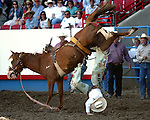 The Beutler & Son Rodeo Company bronc Jack Knife proved to be a handful for Morgan Forbes as he is sent to the ground during short go round action at the annual Greeley Independence Stampede Rodeo on July 4, 2008, in Greeley, Colorado.