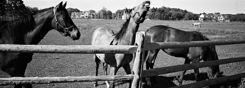 Thoroughbreds at Runnymede Farm, North Hampton, New Hampshire.Photograph by Peter E. Randall