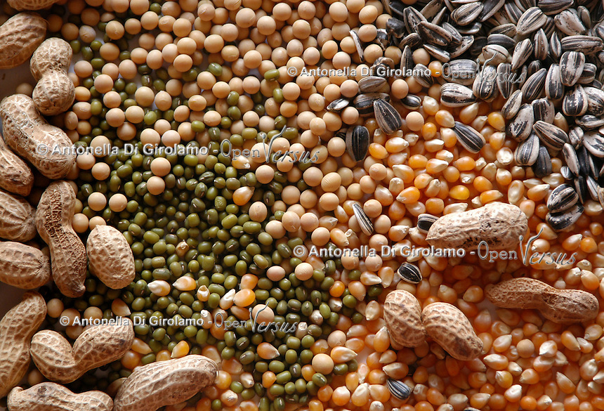 Semi di girasole, mais, soia, arachidi, lino..Seed of sunflower, corn, soybean, peanut..  .