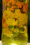 Marigolds marinating in oils in glass jar