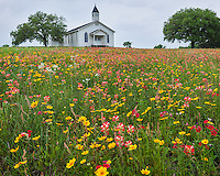 Gonzales County, Texas: Cheapside Interdenominational Community Church set in a field of wildflowers.