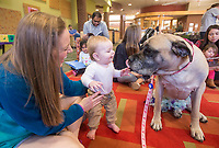 NWA Democrat-Gazette/BEN GOFF @NWABENGOFF<br /> Brooks Lindsey, 10 months, with mother Ambrosia Lindsey, pets Zaida, a trained therapy dog, Saturday, Jan. 5, 2019, during a program at the Bentonville Public Library. Zaida, with handler Tricia Jennings of Gravette, is one of three therapy dogs that alternates visits to the library for Saturday morning reading programs. The programs encourage children to develop reading skills by reading aloud ot the therapy dogs.