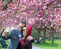 APR 13 Greenwich Park's Cherry Blossom Avenue