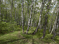 FOREST_LOCATION_90019