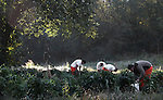 Level one inmates work in the garden that they planted at the beginning of the summer by the Kentucky River. The Level one inmates are allowed to work and get many more privileges based on their good behavior. Photo by Britney McIntosh