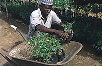Worker in a tree nursery