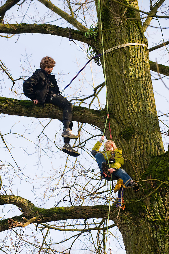 Nederland, Bunnik, 25 jan 2009.Jonge toekomstige actievoerders in de boom..GroenFront! informeerde vandaag met een ludieke aktie bezoekers van Amelisweerd en Rhijnauwen   over de zorgwekkende plannen van Rijkswaterstaat voor Ring Utrecht. Vanaf 12.00 uur konden mensen en kinderen met klimtouwen in een boom hangen, nabij het theehuis Rhijnauwen, Zo konden belangstellenden   proeven aan de technieken die GroenFront! gebruikt bij aktiekampen en bosbezettingen. Onder begeleiding mochten  zowel volwassenen als kinderen via een klimtouw in een boom klimmen. Ook werden de wandelaars ingelicht over de bezwaren tegen de plannen vermeld in de startnotitie Ring Utrecht.Foto (c) Michiel Wijnbergh