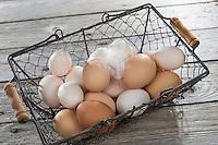 Hühnereier, Hühnerei, Eier, Ei, glückliche Eier von freilaufenden Hühner, Bioei, Bioeier, in einem Korb, Drahtkorb, Zwerghuhn, Zwerghühner, hen's egg, hen's eggs