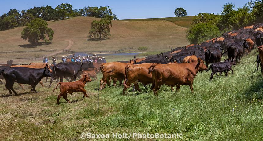 Gabilan Ranch