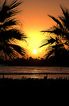 Silhouetted palms against the sun going down. Los Cristianos,Tenerife, Canary Islands.