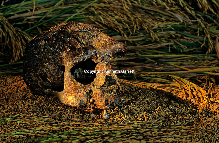 Skull, Sangrian17,Java