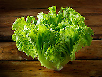 Batavia lettuce  photos, pictures & images