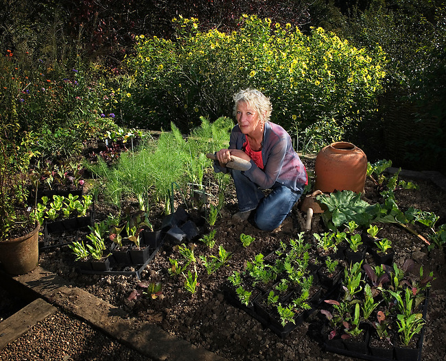 Carol Klein, gardening expert, television presenter and author, planting lettuces in her garden at Glebe Cottage.<br />