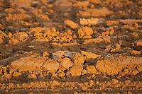 Freshly plough soil<br /> &copy;Tim Scrivener Photographer 07850 303986<br />      ....Covering Agriculture In The UK....