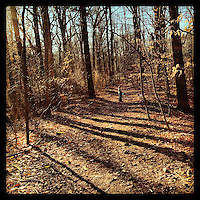 Lori and Elwood walk down a trail in Carpenters Woods on a warm afternoon January 19, 2013.