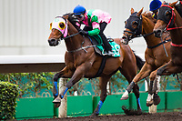 SHA TIN,HONG KONG-APRIL 28: ,Aerovelocity,trained by ,the contender for Chairman's Sprint Prize,runs in barrier trial at Sha Tin Racecourse on April 28,2017 in Sha Tin,New Territories,Hong Kong (Photo by Kaz Ishida/Eclipse Sportswire/Getty Images)