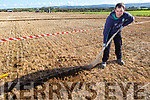 Donal Tydings (Tralee) competing at the Abbeydorney Ploughing with the art of the old style Loy Digging.