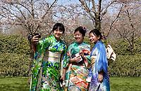 Nederland - Amstelveen - 2018. Cherry Blossom Festival in het Amsterdamse Bos . Het Japanse Hanami Matsuri (Kersenbloesem festival) markeert de start van de lente. De gemeente Amstelveen organiseert dit festival voor de Japanse gemeenschap, als dank voor de schenking van 400 kersenbomen in 2000. ( Met behulp van Photoshop is een plastic tas verwijderd van het gras ).   Foto Berlinda van Dam / Hollandse Hoogte