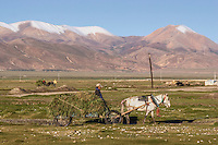 A horse-drawn hay wagon in Tingri, Tibet