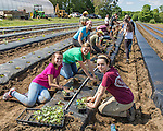 Volunteers from local businesses and organizations who volunteered to work on a non-profit farm that supplies food to a local food bank