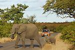 South africa Kruger