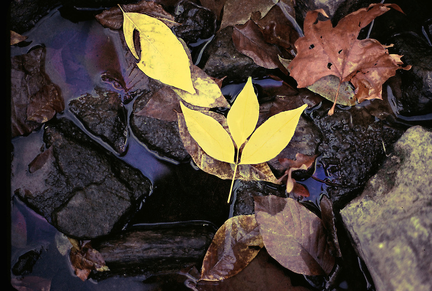Fall Leaves in Creek