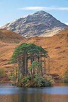 Forested island on Loch Eilt, Scotland