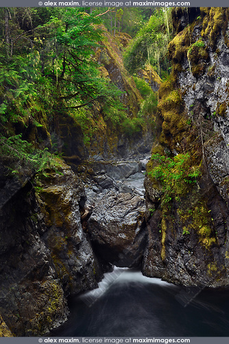 Beautiful nature scenery of mossy trees and rocks at a river canyon in Englishman River Falls Provincial Park. Errington, Vancouver Island, BC, Canada