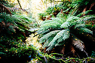 Image Ref: CA302<br />