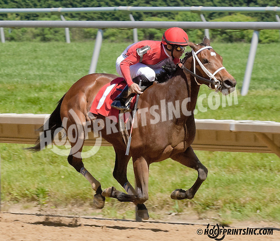 Queen Bee Teresa winning at Delaware Park on 6/5/13