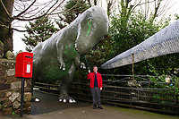 "Pictured: A member of staff stands by the Dinosaur outside of Dan Yr Ogof, The National Showcaves Centre for Wales, Abercraf, Swansea, Wales, UK<br /> A 3/4 of a tonne dinosaur is being auctioned off  in order to raise funds for JDRF, a charity that funds research into finding a cure for people with type I diabetes.<br /> The 15 ft tall (4.6mtrs) fibreglass Allosaurus has been part of the exhibition at Dan Yr Ogof, The National Showcaves Centre for Wales, for some years.<br /> The idea for the auction came from Ashford Price, chairman of the National Show Caves for Wales at Dan yr Ogof, whose son and grandson both live with type 1 diabetes. Ashford said: ""Diabetes is a difficult medical condition even for adults, but for young children it is so much harder.<br /> ""Some young children have six insulin injections every day just to stay alive. Can you imagine the parents' anguish having to put a child through this daily ritual?<br /> The dinosaur measures 24ft long (7.3mtrs) and its 8ft (2.4mtrs) at its widest point <br /> The dinosaur is being auctioned to the highest bidder in order to raise funds for JDRF, a charity that funds research into finding a cure for people with type I diabetes.<br /> To put in a bid email the charity at wales@jdrf.org.uk by the 26th of February."