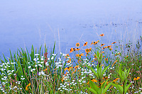 Connecticut meadow garden by lake with native wildflowers; Larry Weaner Design
