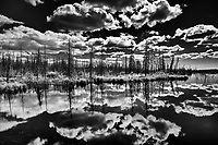 Clouds and boreal forest reflected in wetland<br />