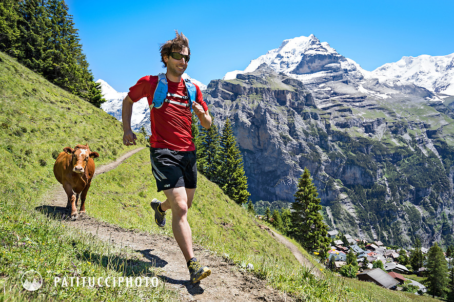 Trail running above the village of Mürren in Switzerland's Berner Oberland. Mürren is famous for being a village without cars, and only accessible by tram above the Lauterbrunnen Valley. Here a trail runner passes a cow on a singletrack trail.