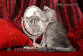 Xavier, ANIMALS, cats, photos+++++,SPCHCATS736,#a# Katzen, gatos