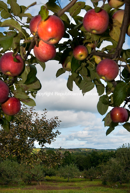 NEW HARTFORD, CT 22 SEPTEMBER 2014-092214JS07--As the leaves begin to change on trees in the rolling hills of the Farmington Valley, fresh apples wait to be picked at Hayward Farm in New Hartford. The farm, which is family owned and operated since 1927, has about 15 acres of fruit trees. <br /> Jim Shannon Republican-American