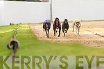 Forget about Big Brother - Im.the star! Lleyton Star (No 2).crosses the line in the 5,510.Nolans Garage Hospital Sweepstake.Round 1 Heat 3 at Kingdom.Greyhound Stadium,.Tralee, on Friday, with Scart Bill.(No 1) and Flowing Move (No 5).close on his tail.